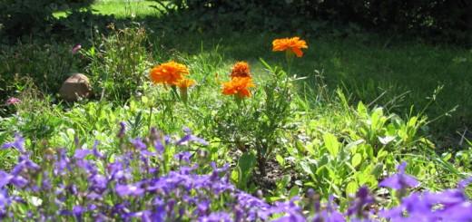 So sichern Sie Ihren Garten für Herbst und Winter